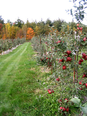 Ag Center Spec Crop Apples