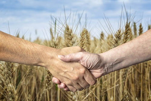 Farmers handshake over the wheat crop. Agricultural business.